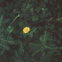 As Long As It Takes You (Single)